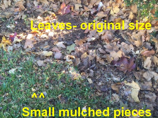 Fall leaves can make Lawn Care easier